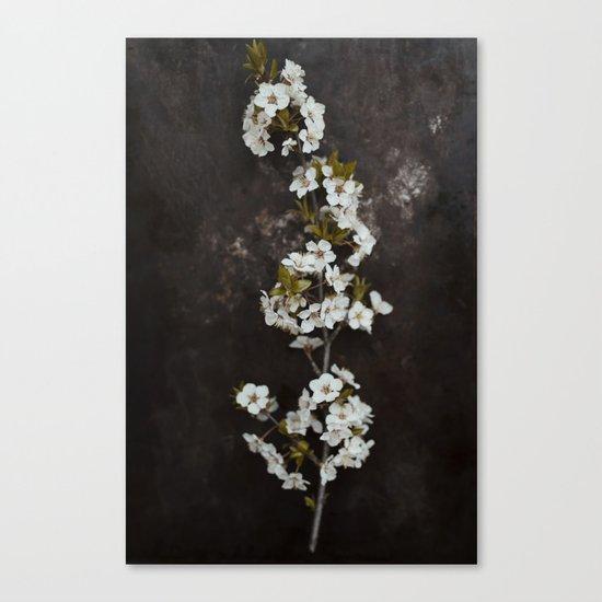 Cherry Blossom on black  Canvas Print