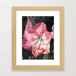 Pink Amaryllis Watercolor Botanical Garden Flower Painting Nature Art Framed Art Print