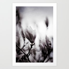Flower Of The Aquitane Art Print