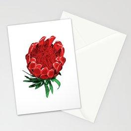 Beautiful Protea Flower - Wonderful Australian Native Flower Stationery Cards
