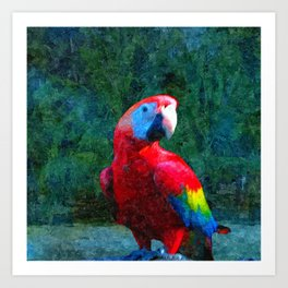 Red Parrot Tropical Bird Painting Art Print
