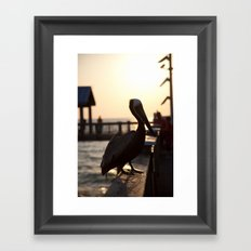 The Pelican Framed Art Print