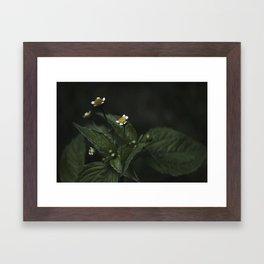 Botanical Still Life Chamomile Framed Art Print