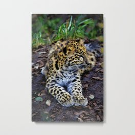 Endangered Amur Leopard Cub by Reay of Light Metal Print
