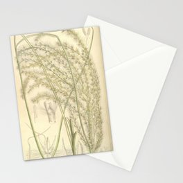 Flower 7304 miscanthus sinensis Stationery Cards