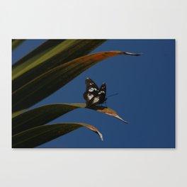 Common wanderer Canvas Print