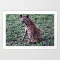 Spotted hyena at the dawn, Serengeti national park, Tanzania Art Print