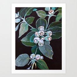 Gumnuts Art Print