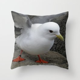 Red-Legged Kittiwake Throw Pillow