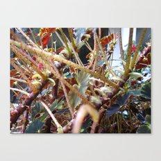 Dragon Fight    [PLANTS]   [VINES] Canvas Print