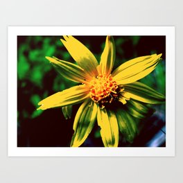 Vintage Yellow Flower Art Print