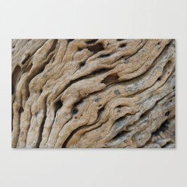 Close-up view rough texture of tree trunk Metal Print Canvas Print