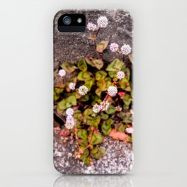 Japanese Knotweed iPhone Case