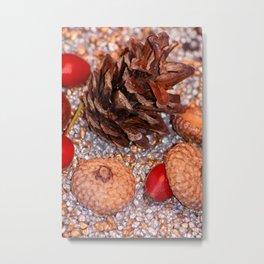 Rosa coxis in arbores autumnales Metal Print