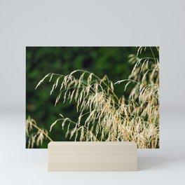 Golden Grass Mini Art Print