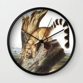 Ring-tailed Bassaris (Bassaris astuta) from the viviparous quadrupeds of North America (1845) illust Wall Clock