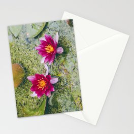 Flower. Red Water-lily (Nymphaea 'James Brydon'). Norfolk, UK. Stationery Cards