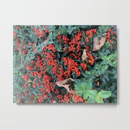 Berries and Leaves  Metal Print