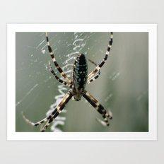 garden spider 2015 XIII Art Print