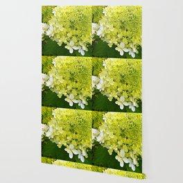 Elegant Chartreuse Green Limelight Hydrangea Macro Wallpaper