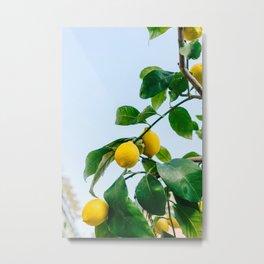 Amalfi Coast Lemons III Metal Print