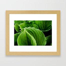 hosta la vista Framed Art Print