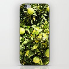 Oranges In Production iPhone & iPod Skin