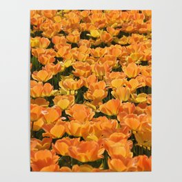Holland- Tulip- Fields -Flowers Poster