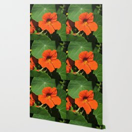 Nasturtium Wallpaper