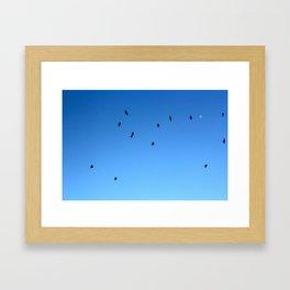 Bird Plane THREE Framed Art Print