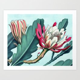 Flowering cactus III Kunstdrucke