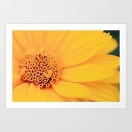 flower photograph Art Print