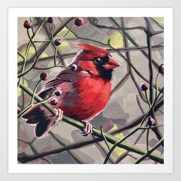 Norther Cardinal 6 Art Print
