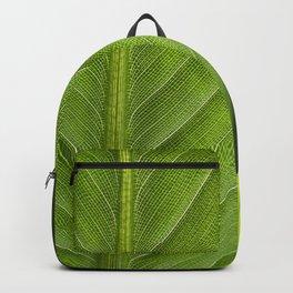 Leaf II Backpack
