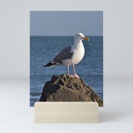 Seagull on rock Mini Art Print