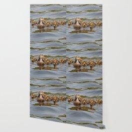 Mallard duck and ducklings Wallpaper