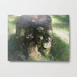 forest field Metal Print