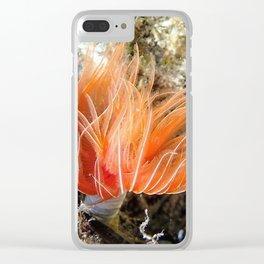 Orange spirograph sailor background | Fond Marin spirographe Clear iPhone Case