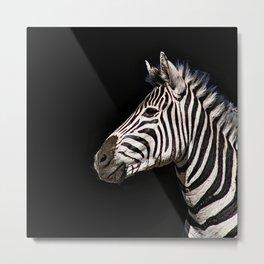 Zebra Face Animal Portrait 2 Metal Print