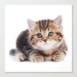 Lonely Kitten Canvas Print