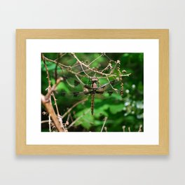 Brown and Black Flyhawk Framed Art Print