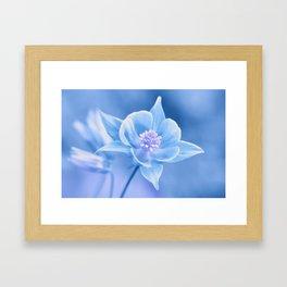 Columbine Flower 161 Framed Art Print
