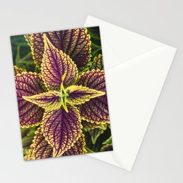 Plant Patterns - Coleus Colors Stationery Cards