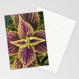 Plant Patterns - Coleus Colors Stationery Cards