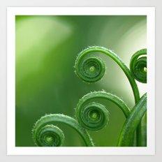 Ancient Ferns... Art Print