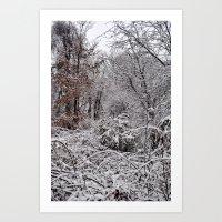 Deerfield Woods Art Print