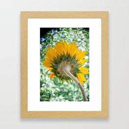 Sun Stalk Framed Art Print