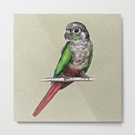 Green-cheeked conure Metal Print