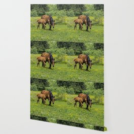 Young foal horse walking next to its mother in a field Wallpaper
