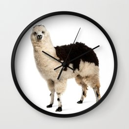 black white llama standing isolated on   Wall Clock
